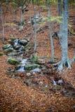 Herbst in Katalonien Spanien, in Montseny Stockfoto