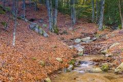 Herbst in Katalonien Spanien, in Montseny Lizenzfreies Stockfoto