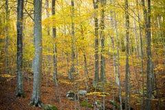 Herbst in Katalonien Spanien, in Montseny Stockbild
