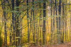Herbst in Katalonien Spanien, in Montseny Stockbilder