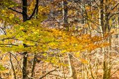 Herbst in Katalonien Spanien, in Montseny Stockfotos