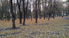 Herbst in Kiew stock footage