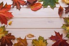 Herbst klassifiziert auf dem Baum mit Blattrahmen für Wörter und insc Lizenzfreies Stockfoto