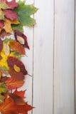 Herbst klassifiziert auf dem Baum mit Blattrahmen für Wörter und insc Stockfoto