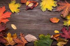 Herbst klassifiziert auf dem Baum mit Blattrahmen für Wörter und insc Lizenzfreie Stockfotografie
