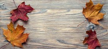 Herbst klassifiziert auf dem Baum mit Blattrahmen für Wörter und insc Stockfotos