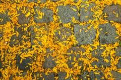 Herbst kommt stockbilder