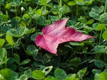 Herbst kommt stockfotografie