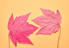 Herbst kommt an Alle Abbildungen auf Wand filterten gerade vollständig dieses Foto Art und Weise Herbstfarben 9 Stockfotos