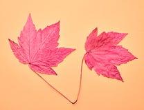 Herbst kommt an Alle Abbildungen auf Wand filterten gerade vollständig dieses Foto Art und Weise Herbstfarben 9 Lizenzfreie Stockfotografie