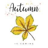 Herbst kommt Autumn Leaves Hand gezeichnete Abbildung Lizenzfreies Stockbild
