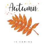 Herbst kommt Autumn Leaves Hand gezeichnete Abbildung Stockfotografie