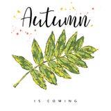 Herbst kommt Autumn Leaves Hand gezeichnete Abbildung Lizenzfreie Stockfotografie
