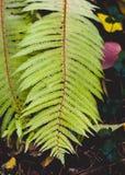 Herbst kommt an Fall lässt Hintergrund Fern Leaf Fashion Design Gelbes Farn Blatt auf Gelb Herbstfallmode Lizenzfreie Stockfotografie