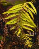 Herbst kommt an Fall lässt Hintergrund Fern Leaf Fashion Design Gelbes Farn Blatt auf Gelb Herbstfallmode Stockfoto