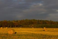 Herbst-Lämmer und Ballen Lizenzfreies Stockfoto