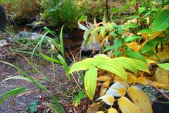 Herbst-Landschaft von Montana Stockfotografie