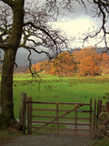 Herbst in Langdale Stockbild