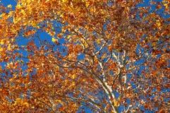 Herbst-Laub Lizenzfreie Stockfotos