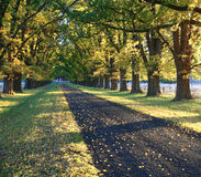 Herbst-Laufwerk Lizenzfreie Stockbilder