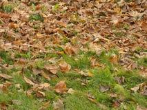 Herbst leafage Laub - gefallene Blätter auf dem Rasen fallen stockfotografie