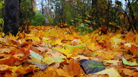 Herbst leafes im Wald Stockfotos