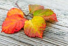Herbst leaveson der hölzerne Hintergrund Stockbild