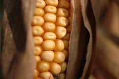 Herbst-Mais Stockfotografie