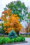 Herbst in meiner Stadt Lizenzfreies Stockbild