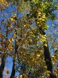 Herbst in Michigan Lizenzfreie Stockfotos