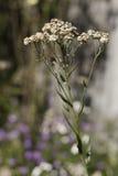Herbst mit Blumen Lizenzfreie Stockbilder