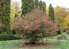 Herbst mit bunten Blättern am botanischen Garten Stockfoto