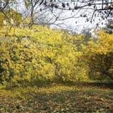 Herbst mit bunten Blättern am botanischen Garten Stockbild