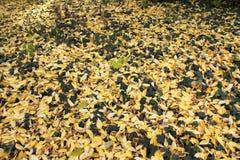 Herbst mit bunten Blättern am botanischen Garten Stockbilder