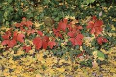 Herbst mit bunten Blättern am botanischen Garten Lizenzfreie Stockfotografie
