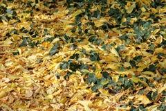 Herbst mit bunten Blättern am botanischen Garten Stockfotos