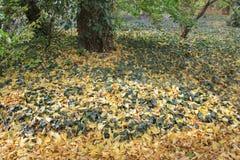 Herbst mit bunten Blättern am botanischen Garten Lizenzfreie Stockbilder