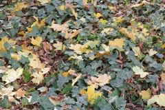 Herbst mit bunten Blättern am botanischen Garten Stockfotografie