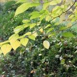 Herbst mit bunten Blättern am botanischen Garten Lizenzfreies Stockfoto
