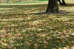 Herbst mit colorfull gefallenen Blättern Lizenzfreies Stockbild