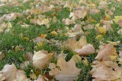 Herbst mit colorfull gefallenen Blättern Stockbilder