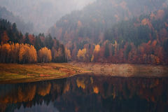 Herbst myst stockbilder