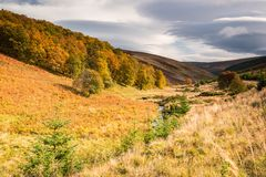 Herbst in Nationalpark Cairngormss Lizenzfreie Stockfotos