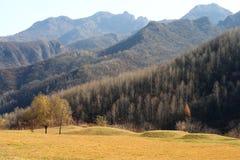 Herbst, Natur Lizenzfreie Stockfotografie