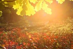 Herbst-Natur-Hintergrund Lizenzfreies Stockbild