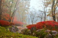 Herbst, nebelhafte Landschaft. Stockbilder