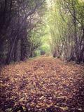 Herbst- oder Fallweg durch den Wald Lizenzfreie Stockbilder