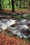 Herbst- oder Sommerflussbank mit Buchenblättern Neues Grün verlässt auf Niederlassungen Überwasser machen Reflexion Regnerischer  stockfoto