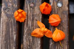 Herbst orange d'automne d'usine parfait image stock