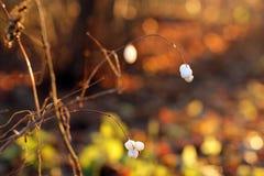 Herbst, Orange, Hintergrund Stockfotografie